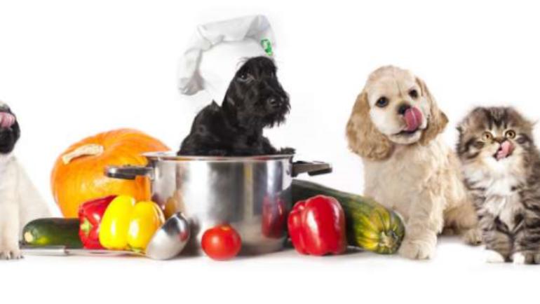 Il cibo umano fa bene ai nostri animali domestici?