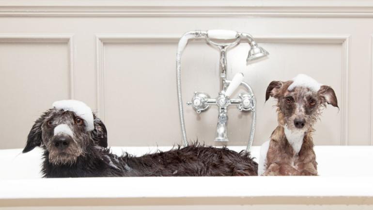 I 5 consigli per far bene lo shampoo al tuo cane