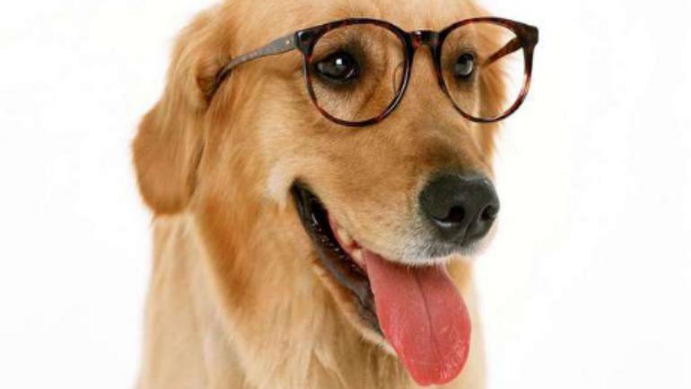 I cani vedono i colori?