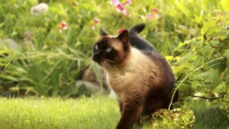 Come possiamo capire le emozioni del nostro gatto?