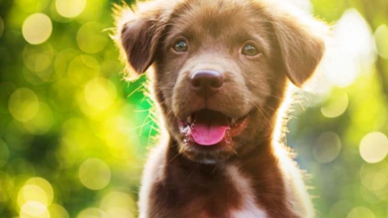Come abituare i cuccioli a non sporcare casa?
