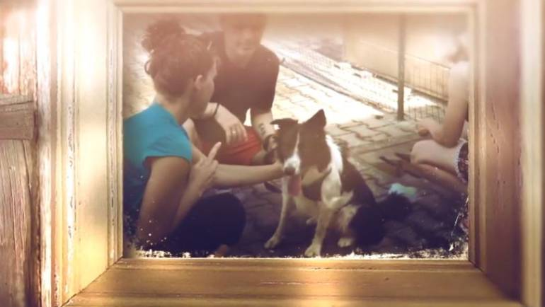 I nostri cani, una giornata per loro! – VIDEO
