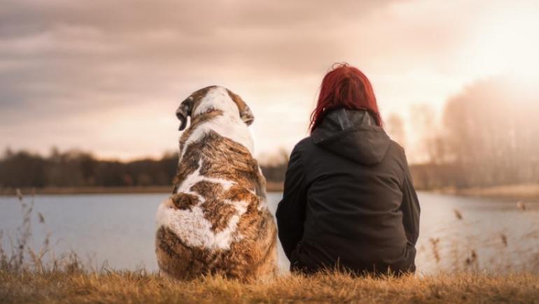 Eutanasia del nostro cane: scopriamo qualcosa in più