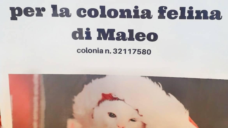 Colletta alimentare per la colonia felina di Maleo